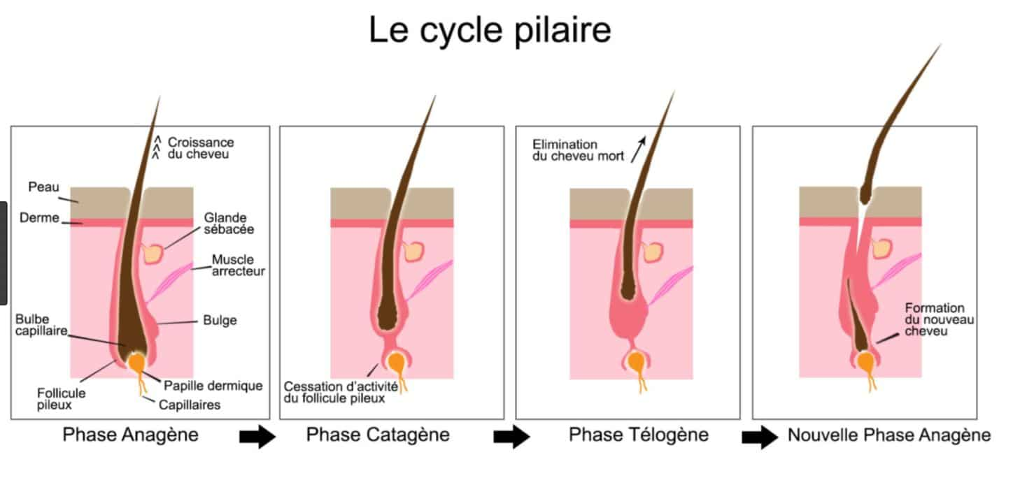 epilation definitive lumiere pulsee Cycle pilaire